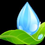 Water & Leaf 3
